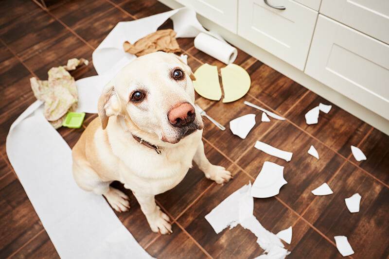 dog anxiety training and separation anxiety
